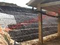 terre-rinforzate-roncosambaccio-4-30x12